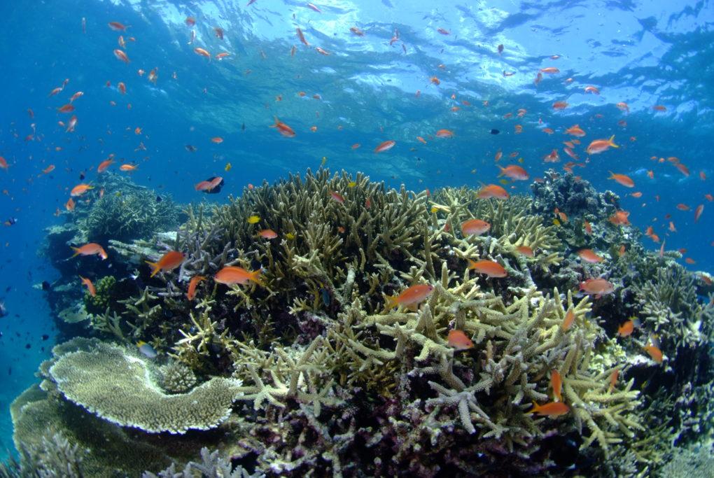 カラフルなサンゴと魚