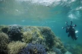 サンゴ撮影中