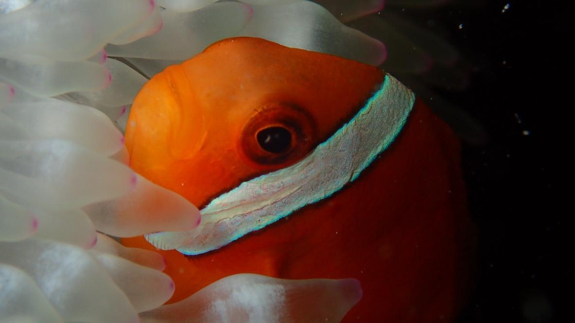 石垣島ダイビングショップ 海のメロディー IN北部